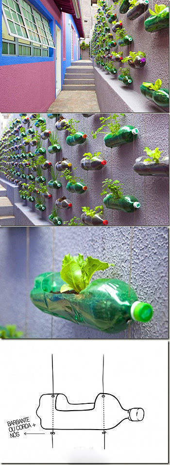 Creative Plant Wall
