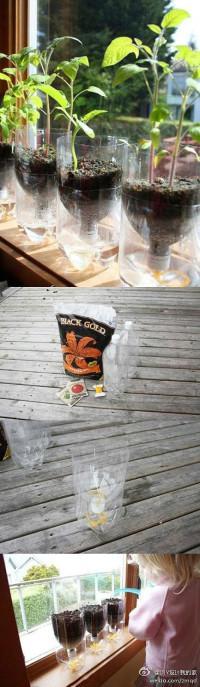 Beverage bottle transformation in to the flowerpot