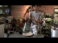 Sprout Home Terrarium DIY