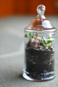A little Terrarium | DIY