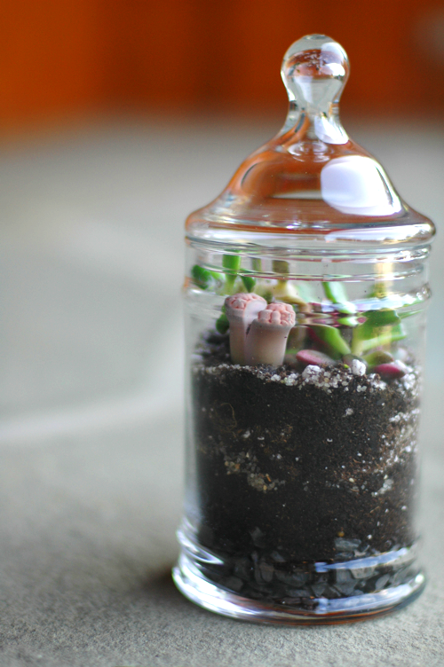 A little Terrarium | DIY