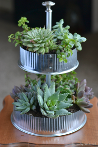 Industrial Tiered Tabletop Succulent Garden
