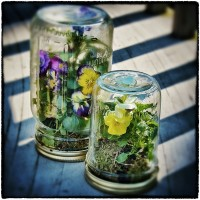 DIY Mason Jar Terrarium | Mothers Day Gifts